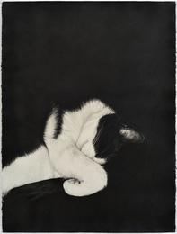 Cat (mirrored)