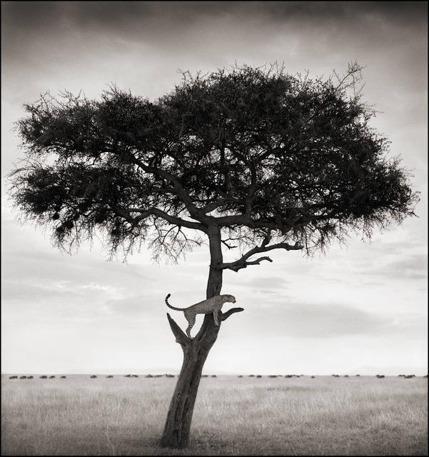 Nick Brandt, 'Cheetah in Tree, Maasai Mara, 2003', 2003, photo-eye Gallery