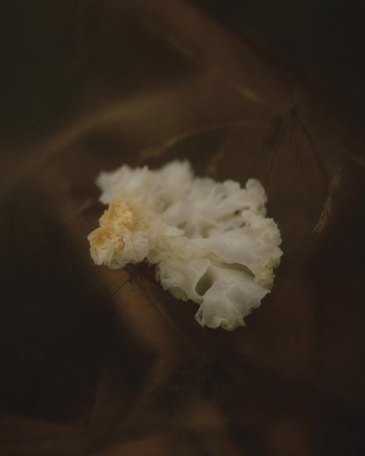 , 'Xue Mu Er (Snow Fungus),' 2018, A.I. Gallery