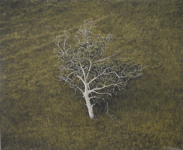 , 'Eucalyptus Tree, Hillside, South Australia,' , Etherton Gallery
