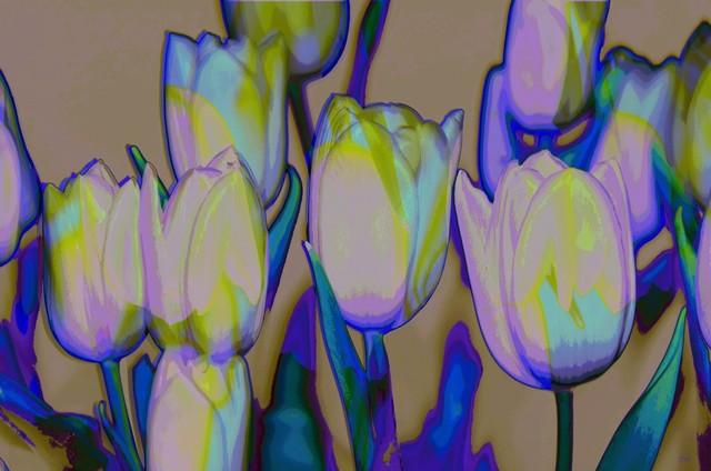 , 'tulips tulips,' 2018, Galerie Kovacek