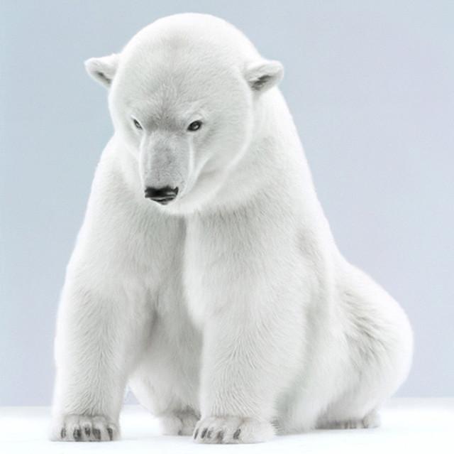 , '28-6 (Agee Polar Bear 8_10 Vancouver),' , Bau-Xi Gallery