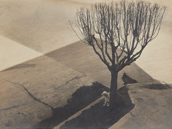 Tina Modotti, 'Untitled, Mexico City,' 1924, Phillips: The Odyssey of Collecting