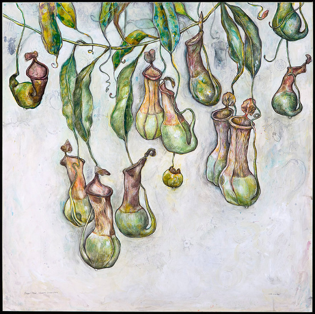 , 'Pitcher Plants, (Sacred Geometries),' 2008, Clark Gallery