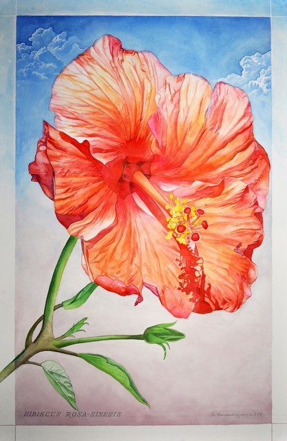, 'Hibiscus Rosa Sinesis,' 2014, The Bonfoey Gallery