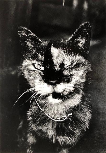 , 'Cat,' , The Lapis Press