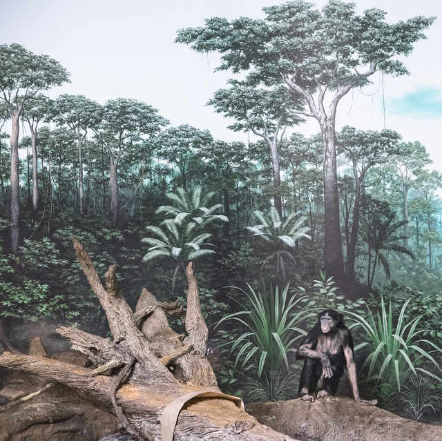 , 'Bonobo and Forest,' 2015, Galerie Dumonteil