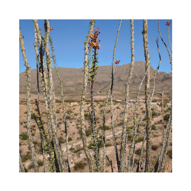, 'Cholula Cactus Landscape, New Mexico, USA,' 2017, ElliottHalls