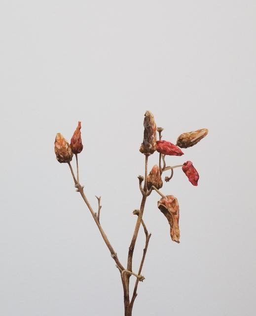 , 'Seca pimenteira II / Dry pepper II,' 2013, Galeria Enrique Guerrero