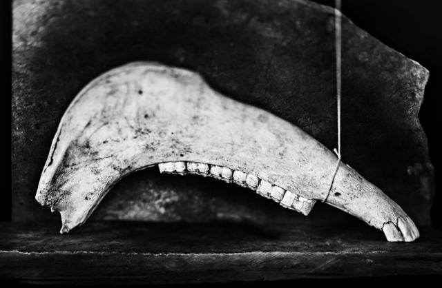 , 'Jawbone (horse) / Quijada de caballo ,' 2015, Jacaranda Images