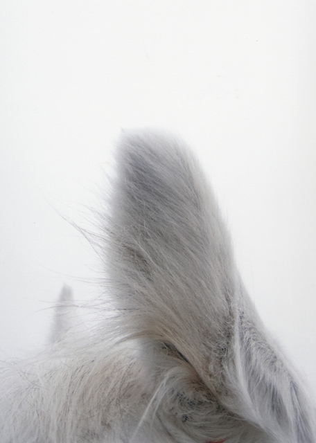 , '#5 Untitled (Ears / Usi) from HORSE 2007-2014,' 2011, Mai 36 Galerie