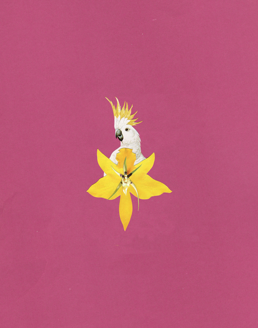 , 'Yellow Bird,' 2019, Subliminal Projects