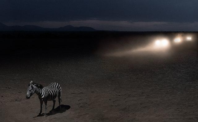, 'Zebra with Headlights,' 2018, Fahey/Klein Gallery