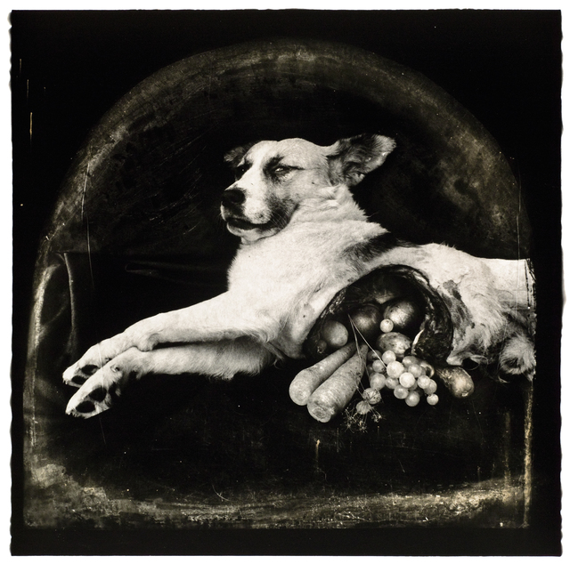 Joel-Peter Witkin, 'The Result of War- The Cornucopian Dog, NM', 1984, Etherton Gallery