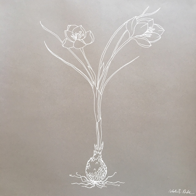 Idoline Duke, 'Crocus line drawing .01', 2019, ARC Fine Art LLC