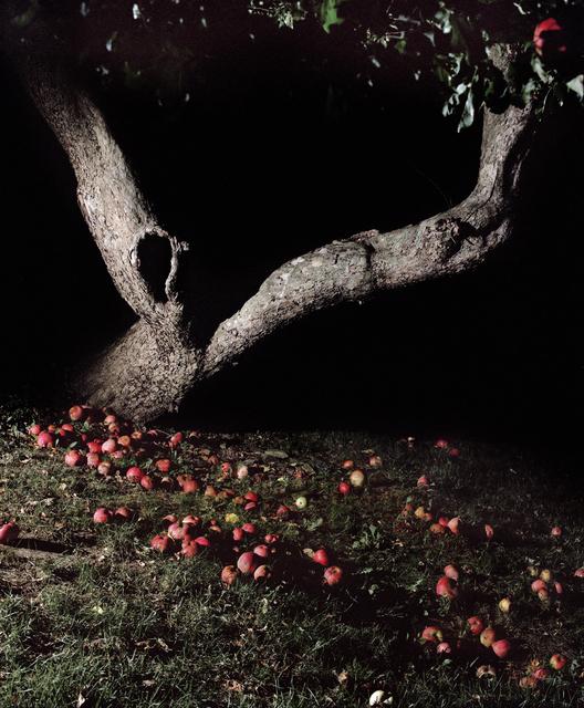 , 'Apple Tree at Night,' 2016, Huxley-Parlour
