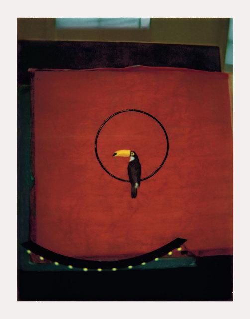 , 'Le Toucan,' 1998, Michael Hoppen Gallery