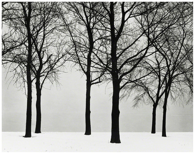 , 'Chicago (Trees at Lake Shore),' ca. 1950, ClampArt