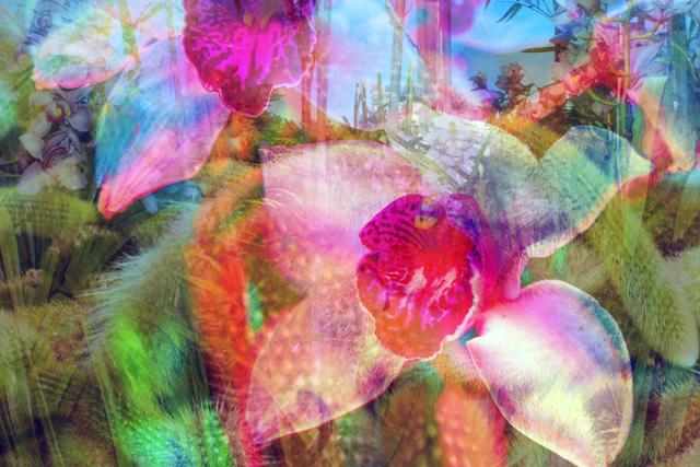 Dolly Faibyshev, 'I Dream of Gardens in the Desert Sand', 2018, Photography, Digital c-print, Uprise Art