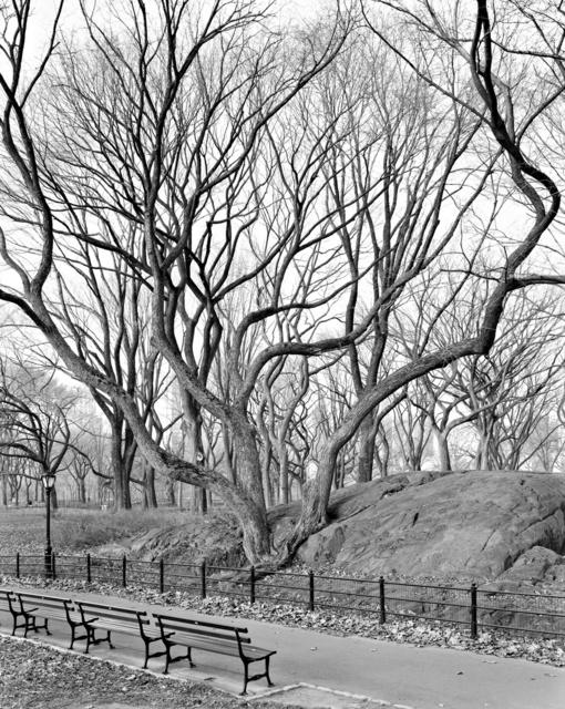 , 'American Elm, Central Park, New York ,' 2012, Galerie Les filles du calvaire