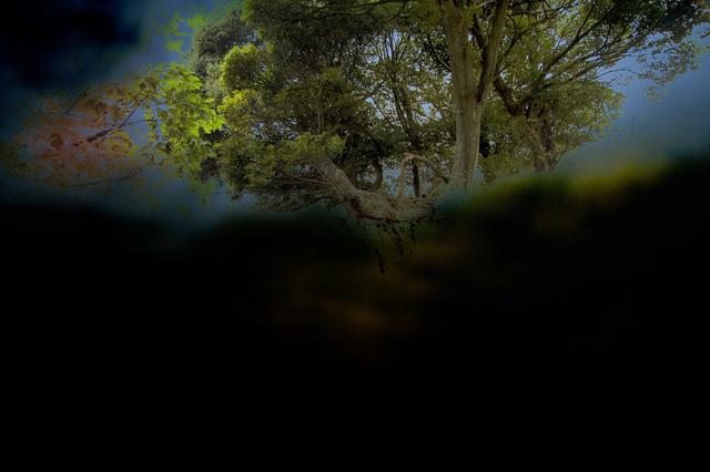 Yasuo Kiyonaga, 'Split of the forest', 2010, Photo Gallery Artisan