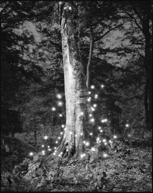 , 'Photo Respiration Trees Shirakami #4,' 2008, Micheko Galerie