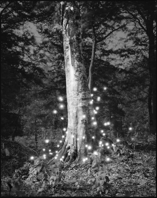 Tokihiro Sato, 'Photo Respiration Trees Shirakami #4', 2008, Micheko Galerie