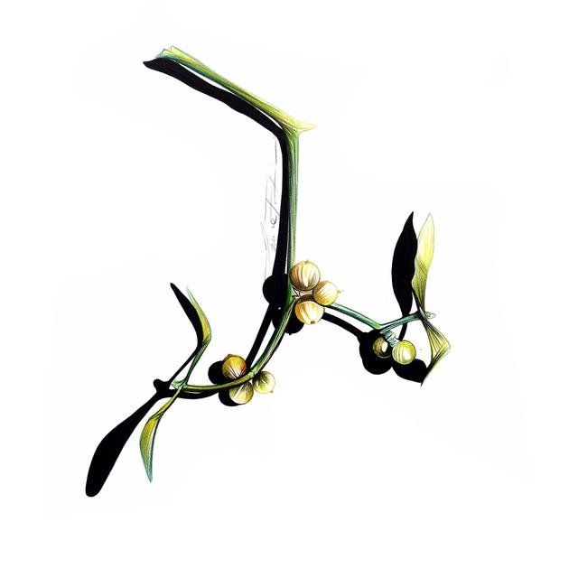 , 'Sketch #55 - Mistletoe,' 2017, Denise Bibro Fine Art