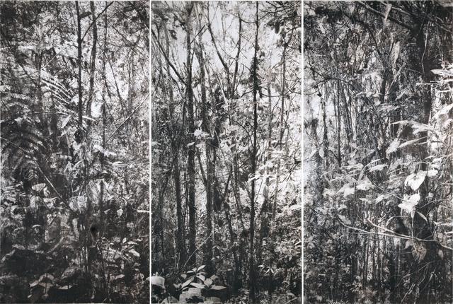 , 'Bosques Lanzas Galaica,' 2017, Galería La Cometa