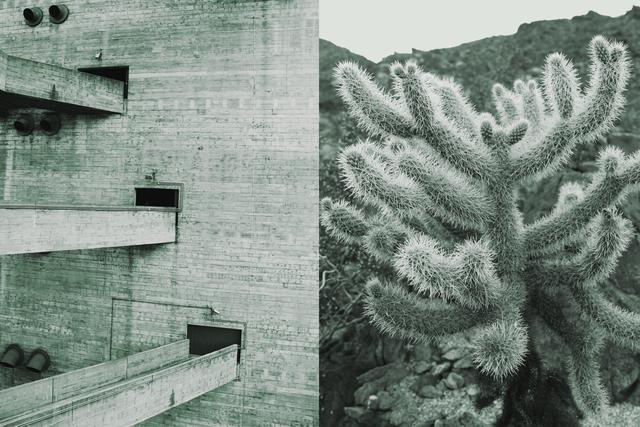 , 'Sesc Pompeia, Cylindropuntia Fulgida,' 2016, Christopher Grimes Gallery