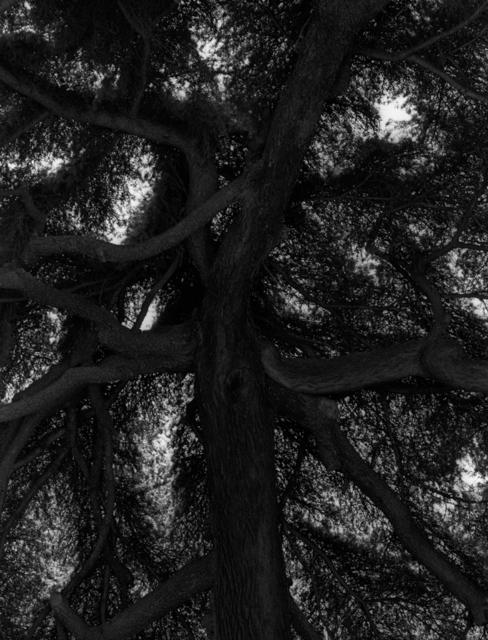 Koo Bohnchang, 'Breath 12', 1995, Photography, Three Shadows +3 Gallery
