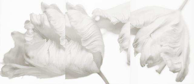 Yumiko Izu, 'Secret Garden Blanc 84', 2008, Howard Greenberg Gallery