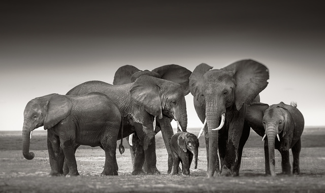 , 'Elephant family in Amboseli,' Kenya 2017, Immagis Fine Art Photography