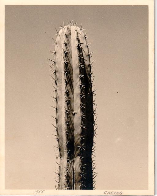 , 'Cactus,' 1955, Henrique Faria Fine Art