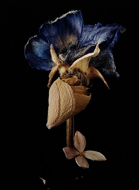 , 'Ur Namnlösa växter mot svart, 3,' 2000, CFHILL