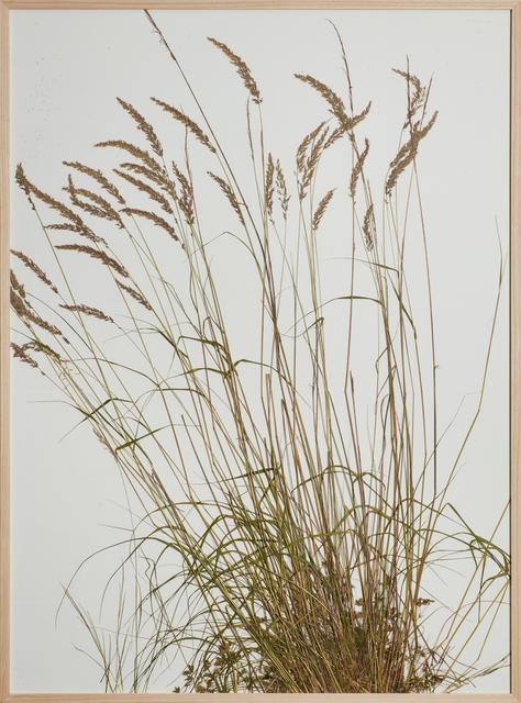 , 'lindgehrn, grass piece,' 2016, Cortesi Gallery