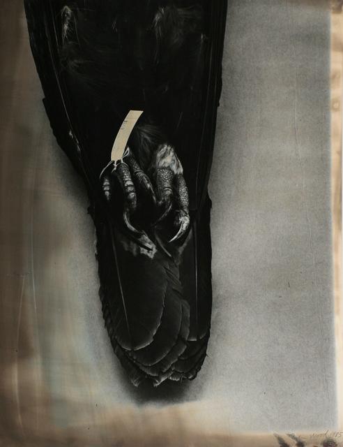, 'Eagle Pelt,' 1985, Bruce Silverstein Gallery