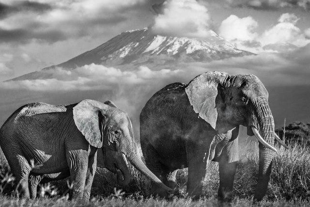 David Yarrow, 'Kilimanjaro ', 2014, Isabella Garrucho Fine Art