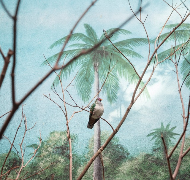 , 'Wompoo fruit dove and palm trees ,' 2015, Galerie Dumonteil