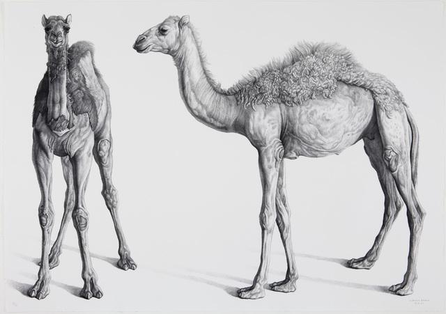 , 'Dromedarios (Camels),' 2008, Marlborough Gallery