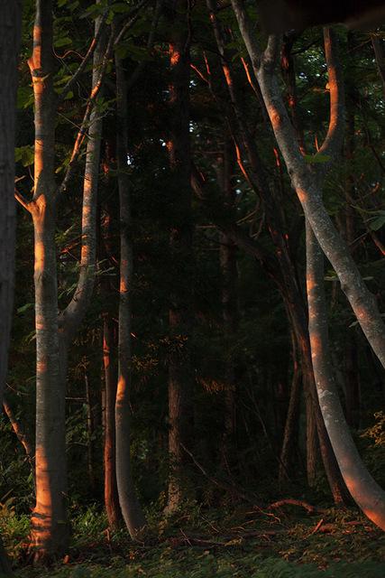 Anni Leppälä, 'Forest Interior (Aomori)', 2013, Purdy Hicks Gallery