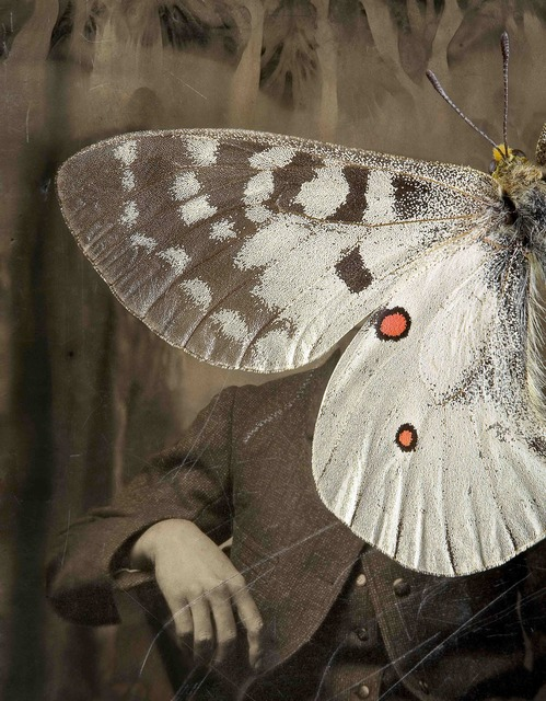 , 'Parnassius apollo,' , photo-eye Gallery