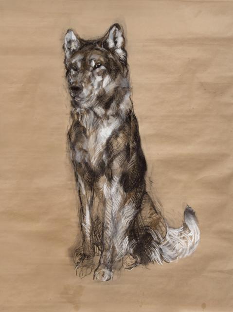 , 'Untitled (Husky) ,' 2014, Tayloe Piggott Gallery