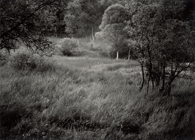 , 'Late Spring afternoon, Dualt Water/ Dark Water, Ledllweyn, Killearn, Stirlingshire, Scotland,' 1987 / 2014, Ingleby Gallery