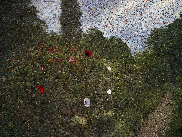 , 'Tent-Camera Image on Ground: View of Monet's Gardens with Flowers on the Ground, Giverny, France,' 2015, Jackson Fine Art