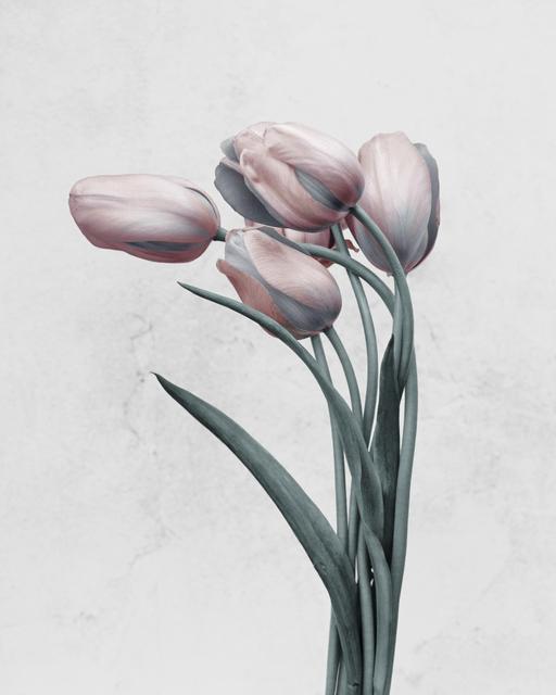 , 'Tulipa gesneriana,' 2016, The Photographers' Gallery