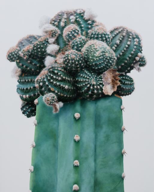 , 'Cactus No. 97,' 2015, Johyun Gallery