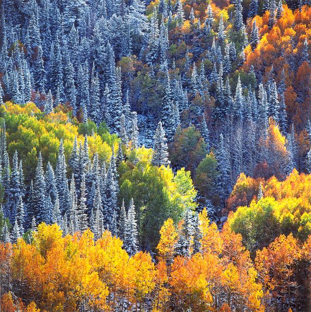 Christopher Burkett, 'Snowy Mountainside Aspens and Sunlight, Colorado', n.d., Photography, Cibachrome print, Etherton Gallery