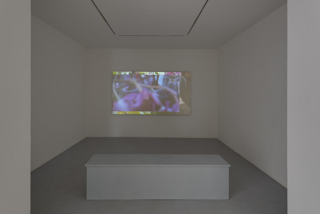, 'The Orchid Show,' 2013, Michel Rein Paris/Brussels