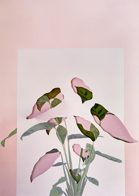 , 'Calatheas,' 2018, The Photographers' Gallery